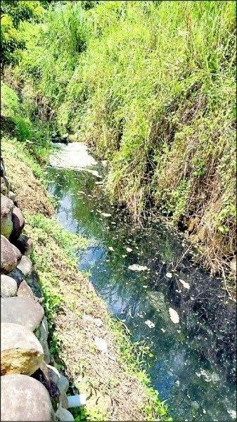 苗縣抓排畜牧廢水 地點多在竹南、通霄