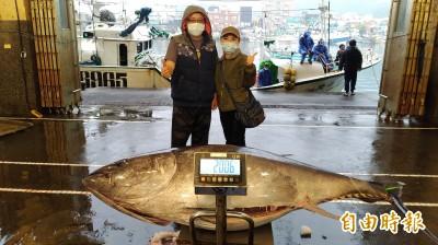 200公斤大黑鮪! 今年「蘇澳第一鮪」返港