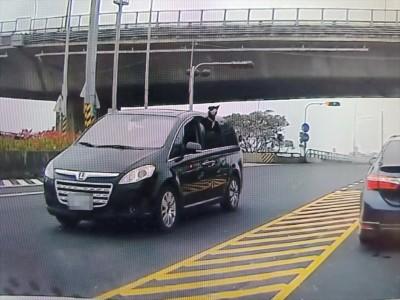 毛小孩探頭到車窗外被檢舉 警依「未依規定裝載貨物」開罰3000