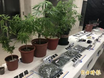 黑幫份子住處栽種大麻 被逮稱「只是想看看大麻成長狀況」