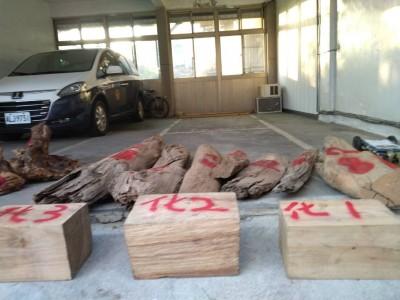 山老鼠集團盜伐一條龍 新竹檢警佈線半年偵破