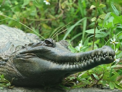 巔覆印象 外表凶狠鱷魚媽媽溫柔護子