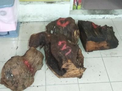 橫行桃園、宜蘭林班地竊木 檢警科技辦案搗破「山老鼠」集團
