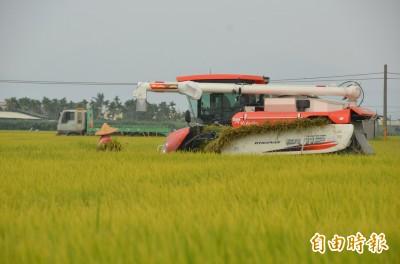 南部一期稻作收割 預估大豐收、價格看漲