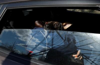 英國研究:狗狗使駕駛更謹慎 降低行車壓力
