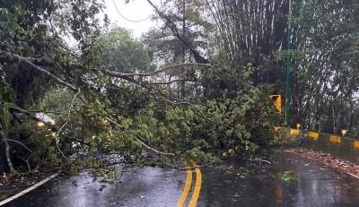 日月潭環湖公路路樹因雨傾倒阻礙交通 晚間緊急搶通