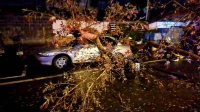 飛來橫禍!台南路樹倒塌砸汽機車 女騎士送醫搶救不治