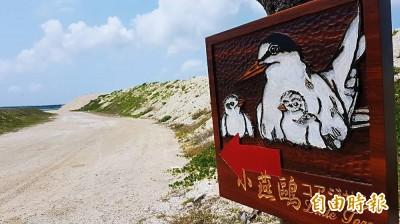 人為干擾少了 澎湖青螺濕地小燕鷗產卵超過去年