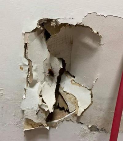 廚房驚現蟑螂影! 他帥氣一腳「解決牆壁」慘呼「老闆叫我賠錢」