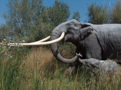 保存良好!擁2.3米長牙巨象遺骸出土 曾被分屍證據曝光