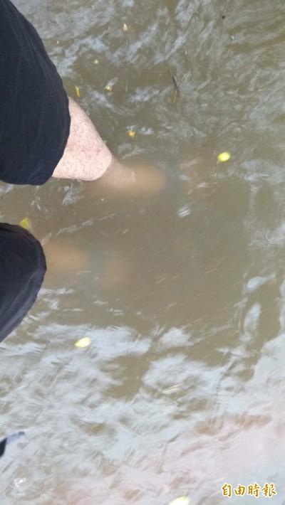 雨炸高雄一整晚 左營部分路段積水到小腿