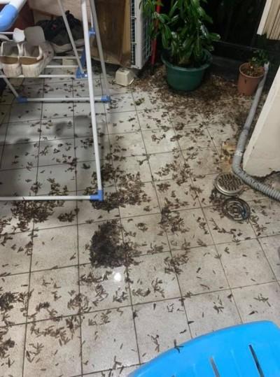 白蟻大軍入侵!密密麻麻「蟲體」鋪滿地磚...嚇壞網友