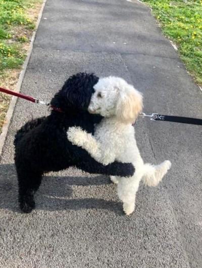 神奇!小狗散步巧遇失散手足 竟立刻相擁感動網友