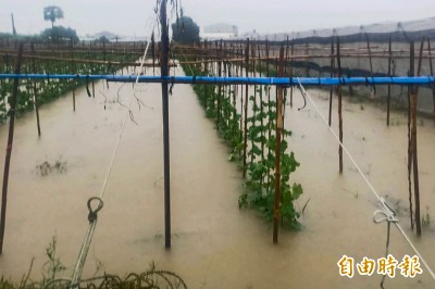 農作物泡水 屏縣初報農損逾800萬