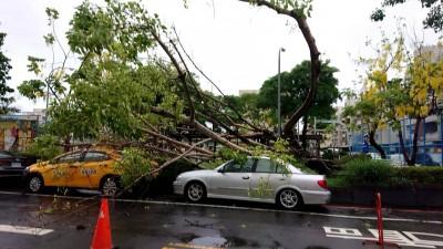 台南菩提樹又倒!清晨大雨 2車遭壓受損