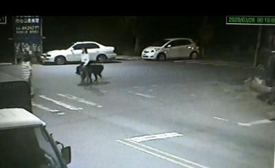 為一隻獒犬 遊民被打到跪地求饒仍暴斃