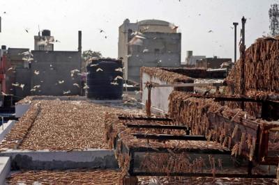 上月才遭20年最強風暴襲擊 印度又遇30年最嚴重蝗災