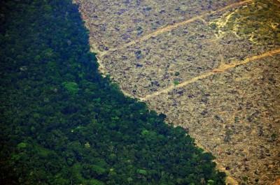 亞馬遜雨林去年遭濫砍逾萬平方公里 今年前4月增55%