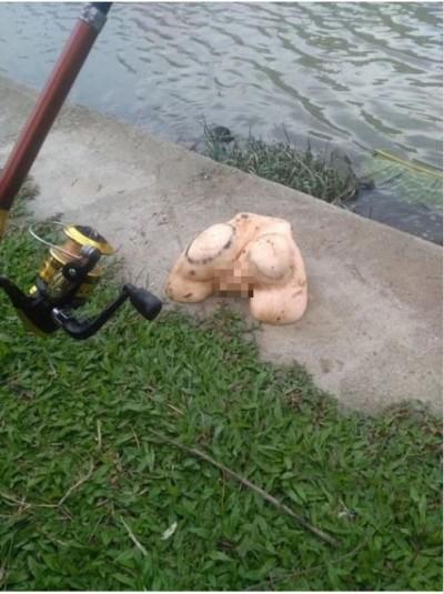 釣魚遇「肉靈芝」 他PO網求助:這是什麼魚
