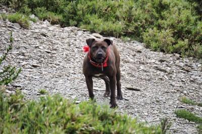 驚!比特犬流浪南湖大山圈谷 山友憂恐威脅自然生態