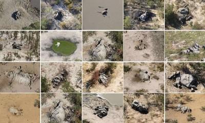 波札那驚傳象群神秘死亡 已發現至少350頭大象屍體