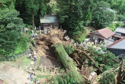 日本暴雨轟炸 岐阜縣神社千年神木倒下