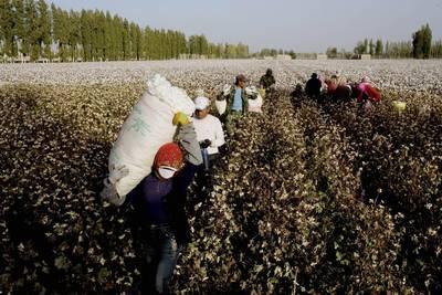 反擊中共迫害維吾爾族  人權團體要求美國禁中國棉花