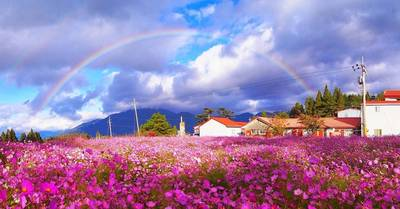 福壽山農場雨後彩虹 網友直呼:好美喔!