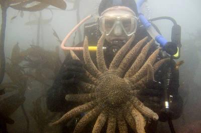 最多24條觸手 「珍稀巨大」瀕危物種現身