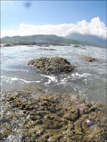 杉原海灣藻礁分布範團廣闊。(記者陳賢義翻攝)