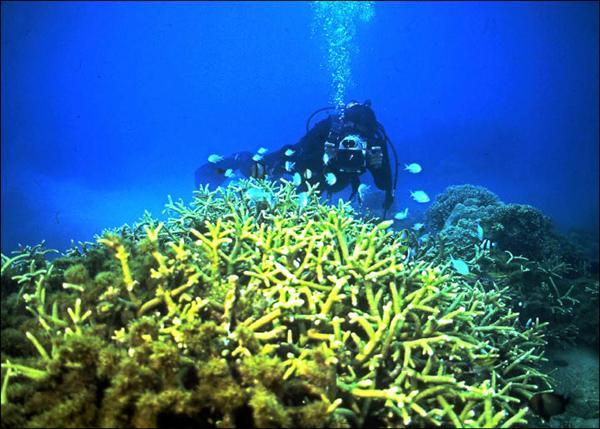 後壁湖海洋資源保護示範區內劃出半公頃多的餵魚區,魚種豐富,同時擁有豐富的珊瑚群。(鄭明修提供)