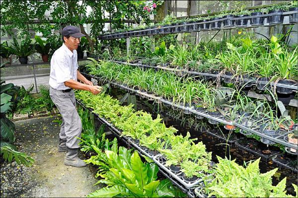 謝正獅設計離地式培養架,讓植栽不沾地,也增加栽種空間。<br>(記者彭健禮攝)