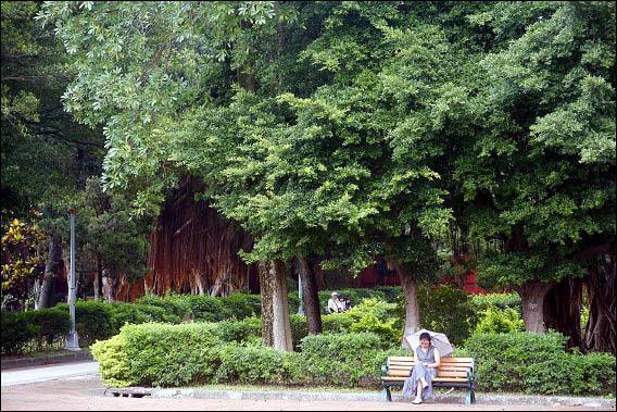 廣慈博愛院附近綠樹成蔭,是信義區罕見的都市綠帶,環保團體呼籲市政府重新考量都更案,保留綠帶給市民。(記者劉榮攝)