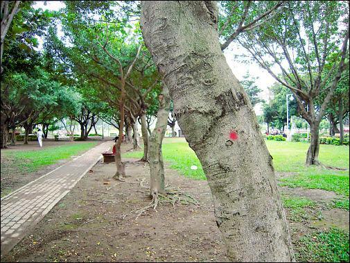 仁愛公園擁有茂密的樹林,是市民心中休憩的好所在。(圖由雙和護樹聯盟提供)