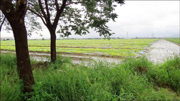 台糖農地都是優良農地,環保署修法規定,未來台糖釋出土地設廠或開發園區,無論面積大小都應實施環境影響評估,最快10月可以實施新規定。(地球公民基金會提供)