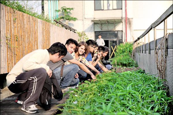 台北科技大學學生於「都市屋頂農場」栽種作物,完成真實版開心農場的心願。(北科大提供)