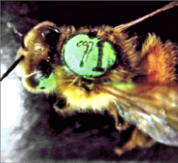 蜜蜂雷射刺青技術。(林達德教授提供)
