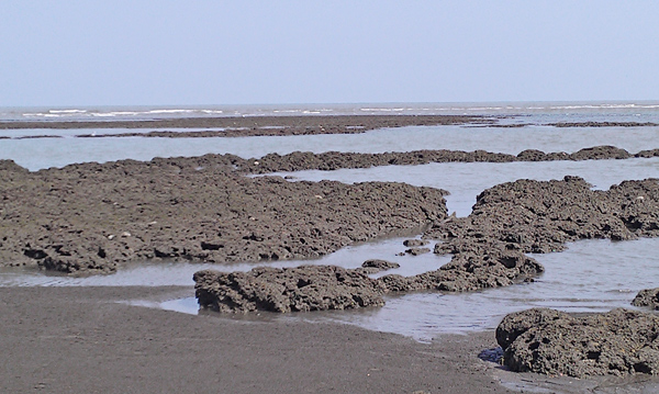 ▲桃園觀新地區藻礁是珍貴的生態棲息環境。(桃縣農業局提供)
