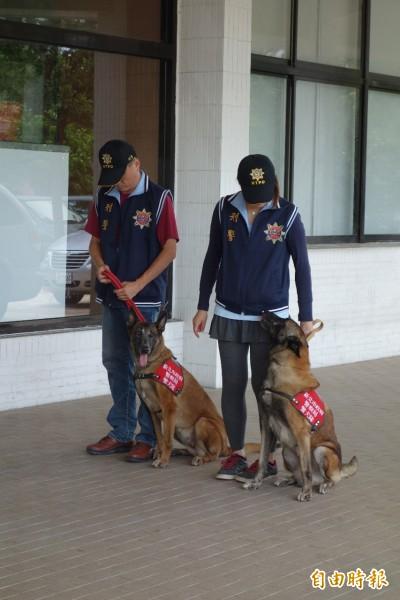 新北警犬隊在貢寮海祭現場執行偵搜毒品任務。(記者林欣漢攝)