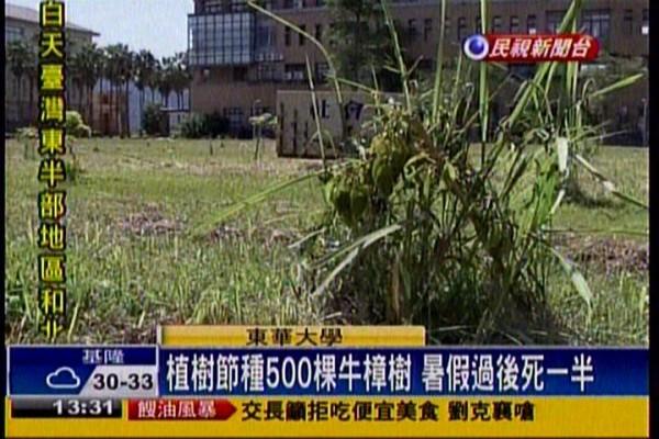 東華大學校園內今年3月才剛種植的樹木,遭質疑因疏於照顧而有7成枯死。(圖片擷取自民視新聞畫面)