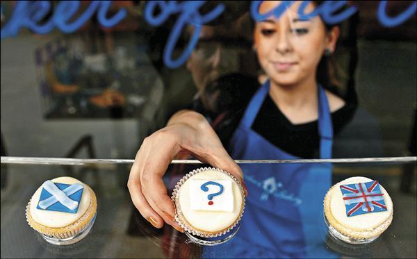 蘇格蘭獨立公投在即,首府愛丁堡一家麵包店推出應景的公投杯子蛋糕,支持獨立(左),維持現狀(右)與尚未決定(中)三種蛋糕任君挑選。(法新社)