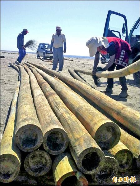 為重現古早竹帆,康樂部落耆老合力挖出掩埋在沙灘已一個多星期的竹子。(記者陳賢義攝)