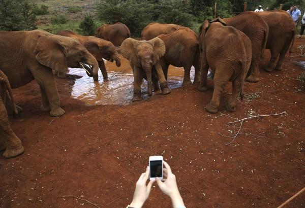 印度驚傳一起大象踩死人的意外事件。(路透)