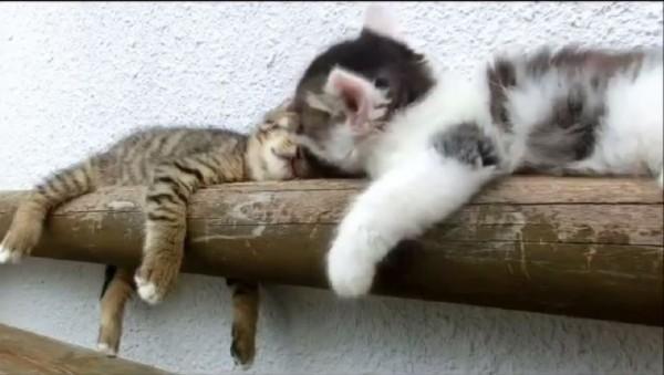 「起來跟人家玩嘛!不要再睡了!」(設計對白)(圖擷取自臉書)