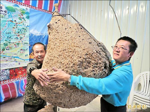 捕蜂達人葉明原(左)摘到的巨無霸虎頭蜂窩,需兩名成年人才有辦法環抱。(記者劉濱銓攝)