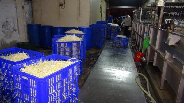 豆芽菜用漂白水泡過後裝箱,準備出貨。(記者李忠憲翻攝)