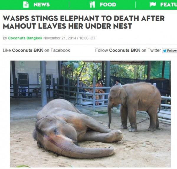 泰國一頭22歲雌象遭虎頭蜂群襲擊至少,被認為是泰國有史以來第一頭遭蜂群殺害的大象。(圖擷取自Coconut Bangkok)
