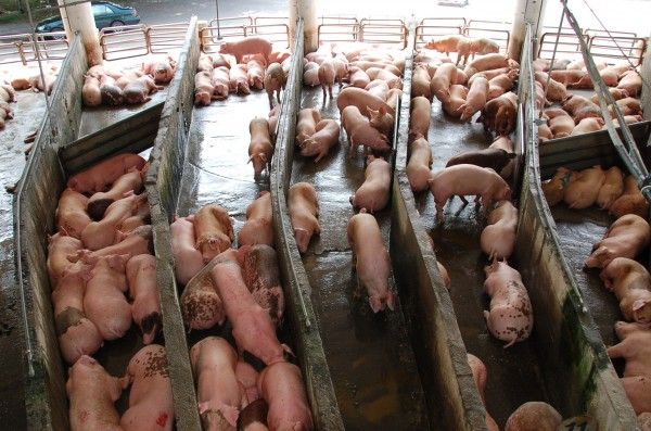 中英兩國各有報導指出,彼此不同的飲食文化是造成環境污染的主要原因。圖與文無關。(情境照,記者張存薇攝)