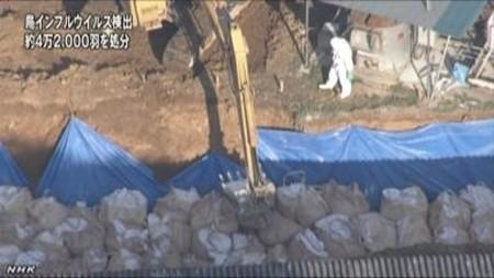 日本宮崎縣政府發現感染禽流感的養雞場後,立即進行撲殺和消毒。(圖擷取自國際在線)
