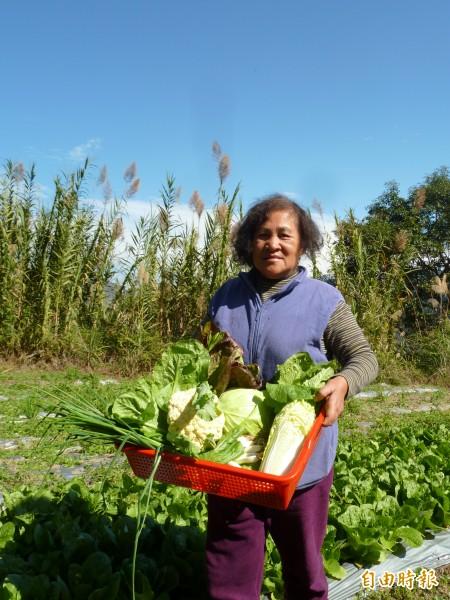 新竹尖石鄉石磊部落的泰雅原住民達陸的羅慶郎自然農場,透過無毒、利用在地資材施肥的培植出的新鮮蔬菜,可直接摘取食用。(記者甘芝萁攝)